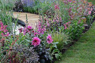 Tips från trädgårdsplaneraren